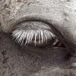 Andrew Christie - East Dorset Horseshow