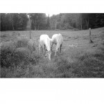 Andrew Christie - Shrewsbury Horses